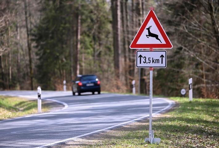 image 1 37 - Wildunfall vermeiden: Wo Reh und Wildschwein häufig die Straße queren